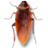 Cockroach on Desktop 1.2