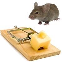 آموزش ساخت یک تله موش خانگی
