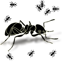 حرکت مورچهها بر روی میز کار