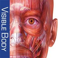 آناتومی عضلات بدن انسان