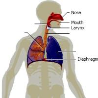 آناتومی عمومی بدن انسان و ارائه اطلاعات اولیه در مورد آنها
