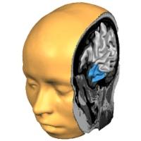 آناتومی مغز انسان و کاوش در آن