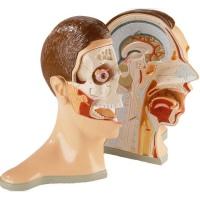 اطلس سه بعدی بدن انسان