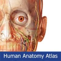 تشریح و آناتومی بدن انسان توسط مدلهای سه بعدی