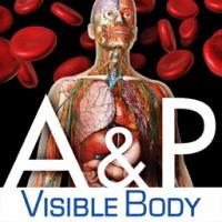 آناتومی و فیزیولوژی بدن انسان